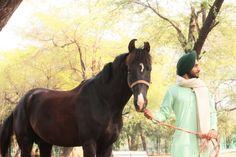 Men's Fashion Sikh Fashion Urban Sardar Traditional Wear
