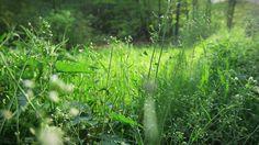 W lesie tuż za Siedliskiem na Wygonie na Mazurach