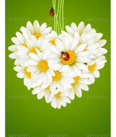 You're a daisy if ya do! ( Val Kilmer as Doc Holliday in Tombstone) The Daisy is my favorite flower!