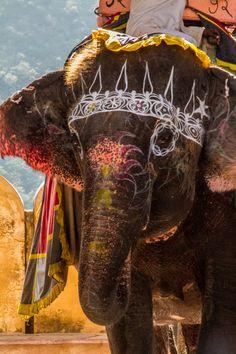 Beschilderde olifant.