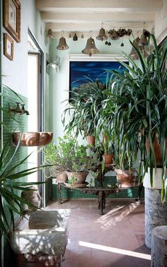 Winter garden: This is filled with plants given to Hamel by his Viennese aunt; they have travelled with him from home to home for 20 years