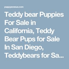 Teddy bear Puppies For Sale in California, Teddy Bear Pups for Sale In San Diego, Teddybears for Sale in Southern California, Buy Teddy Bears