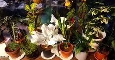 Hulluna kasveihin! Nevada, Plants, Flora, Plant, Planting