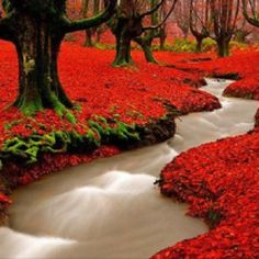 If this is real, can someone take me here please!!! :) Red Autumn Woods, Portugal...amazing.