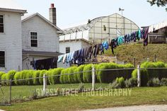 Farm Photograph - Laundry Day - 8x12 Photograph Amish Laundry Hanging on Line