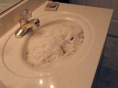 El gato esta esperando a que el dueño abra el grifo