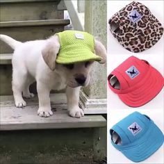 Adorable Summer Dog Hat - FREE - Just pay Shipping! Available in 10 Color/Styles Cute Baby Animals, Funny Animals, Diy Pour Chien, Cute Puppies, Cute Dogs, Yorkie Puppies, Funny Dogs, Summer Dog, Summer Hats