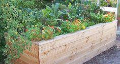 Gemüseanbau im Hochbeet - Mein schöner Garten http://www.mein-schoener-garten.de/de/gartenpraxis/nutzgarten/gemueseanbau-im-hochbeet-22492