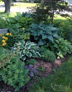 Planting in the shade and a summer garden tour - Jennifer Rizzo