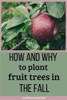 And Plant A Homestead Orchard Fall is an excellent time to plant fruit trees. Learn why and how to plant an orchard.Fall is an excellent time to plant fruit trees. Learn why and how to plant an orchard. Home Vegetable Garden, Fruit Garden, Edible Garden, Flowers Garden, Garden Plants, Fruit Plants, Flower Gardening, Outdoor Plants, Organic Gardening