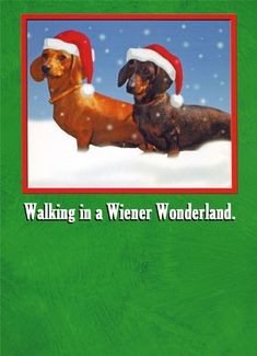 Image result for funny christmas dogs greetings