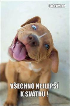 Přání k svátku (pro muže, pro ženu)   Pobavime.cz Animals And Pets, Baby Animals, Funny Animals, Cute Animals, Cute Puppies, Cute Dogs, Dogs And Puppies, Doggies, Puppy Face