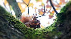 Eichhörnchen mit einer Nuss - Jahreszeiten - Galerie - Community