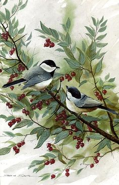 Chickadees Canvas Print by Steven W Schultz. All canvas prints are professionally printed, assembled, and shipped within 3 - 4 business days and delivered ready-to-hang on your wall. Choose from multiple print sizes, border colors, and canvas materials. Watercolor Bird, Watercolor Paintings, Canvas Art, Canvas Prints, Christmas Paintings, Bird Pictures, Wildlife Art, Bird Prints, Bird Art