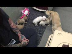 Shelter Dog Won't Move Until Someone Brings Back Her Babies