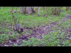 Rajakaamera: Rajakaamera Trunks, Plants, Youtube, Drift Wood, Tree Trunks, Plant, Youtubers, Youtube Movies, Planets