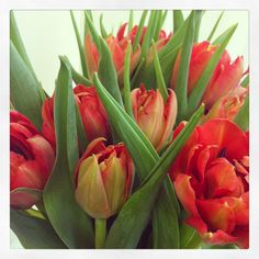 Tulips Tulips, Flowers, Plants, Photography, Photograph, Fotografie, Photoshoot, Plant, Royal Icing Flowers