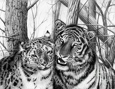 Graphite Drawings - When Two Hearts Collide  by Peter Piatt