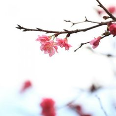 Christina Hubbard shares what searching for cherry blossoms taught her about pain, renewal, and God's timing. A guest post for Jessica Galan.