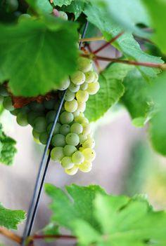 Allez plus loin dans votre passion des vins, les caves Ackerman vous feront découvrir tout le patrimoine des vins ligériens et son savoir-faire.