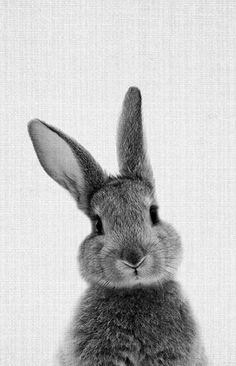 Cute Baby Bunnies, Cute Baby Animals, Animals And Pets, Funny Animals, White Bunnies, Black Bunny, Black And White Rabbit, Cute Bunny Pictures, Rabbit Pictures