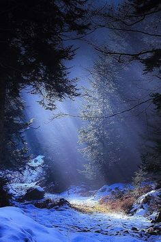 Sunlight in winter,   WINTER WONDERS                   More