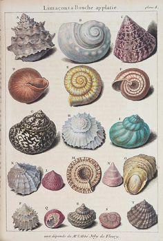 b79156d4f6d44058d436c2c32e93796c--seashell-drawings-drawings-of-eyes.jpg (620×921)
