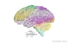 Cerveau - Texte