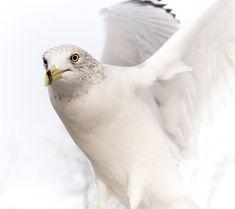 17 Super ideas white bird of prey Dove Images, Dove Pictures, Bird Pictures, Bird Wallpaper, White Wallpaper, Eagles, Bird Of Paradise Pose, White Bird Tattoos, Bird Silhouette
