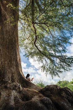 The Magic Faraway Tree, Sandra Cisneros, San Antonio River, Yennefer Of Vengerberg, Forest Girl, Cypress Trees, Anime Art Girl, Aesthetic Art, Nature Photography