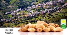 fetasoller.com Knackfrisch aus Mallorca! Pumpkin, Outdoor, Almonds, Fresh, Majorca, Products, Outdoors, Pumpkins, Outdoor Games