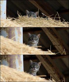 cat's curiosity