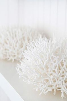White coral. I love adding a piece of coral into my décor. I don't want it to look like a beach theme, just a pretty piece of natural art.
