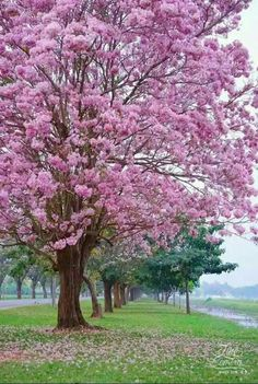 My yard will be all flowering trees Beautiful Nature Wallpaper, Beautiful Landscapes, Beautiful Images, Beautiful Gardens, Beautiful Flowers, Natur Wallpaper, Landscape Photography, Nature Photography, Colorful Trees