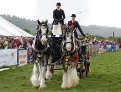 Draft horse showing - Wikipedia, the free encyclopedia.  /  Awesome picture EL./