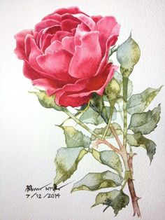 Rose by Ti Watercolor