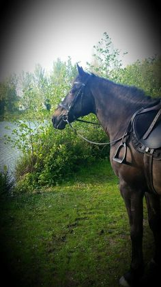 From Charlotte, Ashford  | The Jacksons BIG Equestrian Picture Competition #horse #riding #countryside #equestrian
