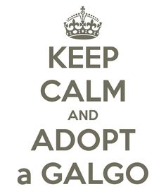 KEEP CALM AND ADOPT a GALGO