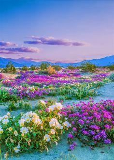 Untitled En 2020 Paysages Magnifiques Belle Nature Fleurs Sauvages