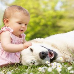 12 Steps for Introducing Babies and Dogs | WOOFipedia by The American Kennel Club