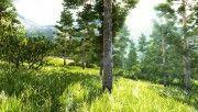 hd beautiful forest 3 wallpaper download