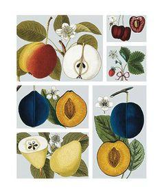 Fruit - Natural History Museum greeting card