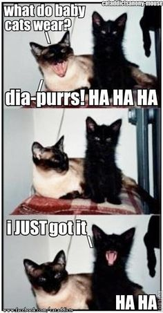 He who laughs last is usually the idiot. (Cat Addicts via For the Love of Black Cats (Black Cat Appreciation Page))