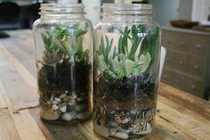 DIY mason jar terrarium #terrarium