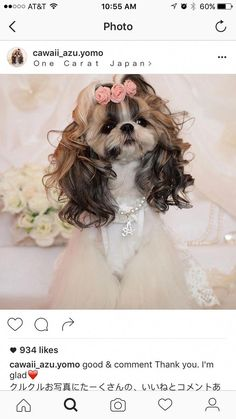 Things I admire about the Playfull Shih Tzu Puppies Shih Tzu Hund, Shih Tzu Puppy, Shih Tzus, Yorkie, Havanese Puppies, Cute Puppies, Cute Dogs, Dogs And Puppies, Retriever Puppies