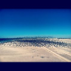 The birds of Jones Beach (Long Island, NY)..took this while running