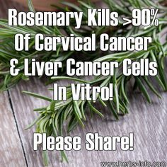 Rosemary Kills Over Of Cervical Cancer & Liver Cancer Cells In Vitro; - note in vitro is not IN VIVO (in life - live organism). Liver Cancer, Cancer Cure, Cancer Cells, Beat Cancer, Healing Herbs, Medicinal Herbs, Herbal Medicine, Natural Medicine, Chinese Medicine