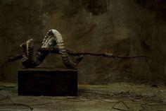 PUTESCO - Nicholas Alan Cope Photography
