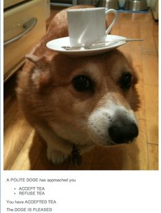 Funny pictures about A polite corgi. Oh, and cool pics about A polite corgi. Also, A polite corgi. Funny Dog Memes, Funny Dogs, Cute Dogs, Funniest Memes, Funny Animal Pictures, Funny Animals, Cute Animals, Fierce Animals, Dog Pictures