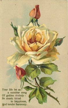 Yellow rose with peach-colored buds.  Poem:  Your life be as a summer song of golden melody ~ its music turned to happiness, and tender harmony.